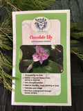Seeds from Tasmania - Chocolate Lily (OVERSEAS OPTION NO GST)