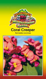 Kennedia coccinea - Coral Creeper (OVERSEAS OPTION NO GST) (SEEDS)