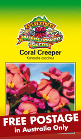 Kennedia coccinea - Coral Creeper (SEEDS)