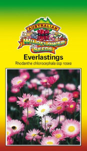 Rhodanthe chlorocephala ssp rosea - Everlastings (OVERSEAS OPTION NO GST) (SEEDS)