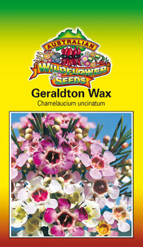 Chamelaucium uncinatum - Geraldton Wax (OVERSEAS OPTION NO GST) (SEEDS)
