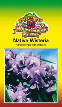 Hardenbergia comptoniana - Native Wisteria (OVERSEAS OPTION NO GST) (SEEDS)