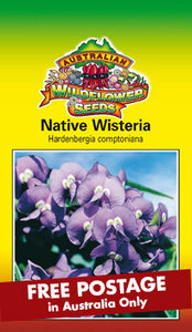 Hardenbergia comptoniana - Native Wisteria (SEEDS)