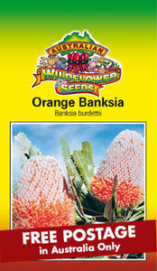 Orange Banksia
