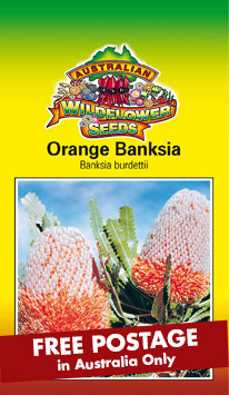 Banksia burdettii- Orange Banksia (SEEDS)