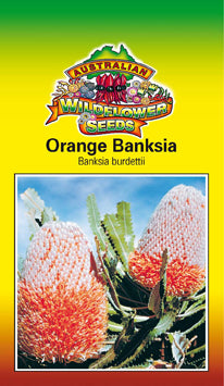 Banksia burdettii - Orange Banksia (OVERSEAS OPTION NO GST) (SEEDS)