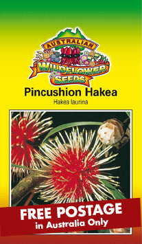 Hakea laurina - Pincushion Hakea (SEEDS)