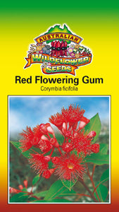 Corymbia ficifolia syn. Eucalyptus ficifolia -  Red Flowering Gum (OVERSEAS OPTION NO GST) (SEEDS)