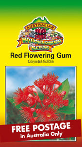 Corymbia ficifolia syn. Eucalyptus ficifolia - Red Flowering Gum (SEEDS)