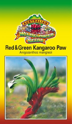Anigozanthos manglesii - Red & Green Kangaroo Paw (OVERSEAS OPTION NO GST) (SEEDS)