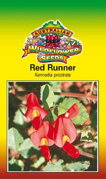Kennedia prostrata - Red Runner (OVERSEAS OPTION NO GST) (SEEDS)