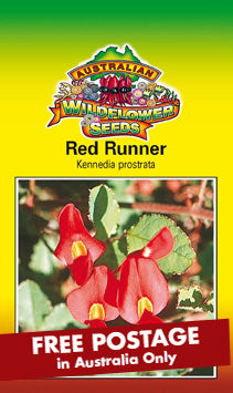 Kennedia prostrata - Red Runner (SEEDS)