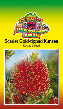Kunzea baxteri - Scarlet Gold-tipped Kunzea (OVERSEAS OPTION NO GST) (SEEDS)
