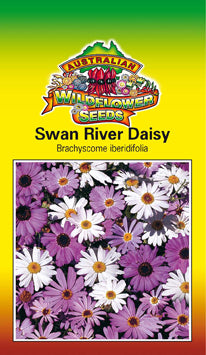 Brachyscome iberidifolia - Swan River Daisy (OVERSEAS OPTION NO GST) (SEEDS)
