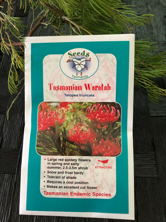 Seeds from Tasmania - Tasmanian Waratah (OVERSEAS OPTION NO GST)