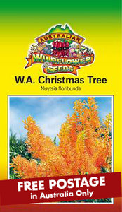 Nuytsia floribunda - WA Christmas Tree (SEEDS)