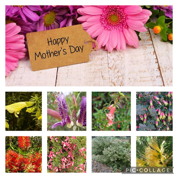 MOTHER'S DAY 8 X PLANT PACK
