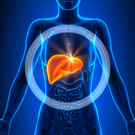 WARNING!  What you should know about your Liver Heath
