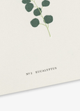 Greeting card Eucalyptus