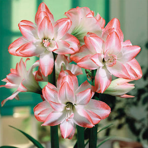 Pink and White Lily, DIY Diamond Painting Kit