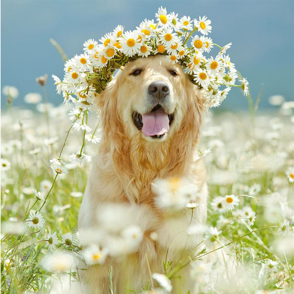 Dog with a Crown of Flowers, DIY Diamond Painting Kit