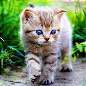 Blue eye kitten, DIY Diamond Painting Kit