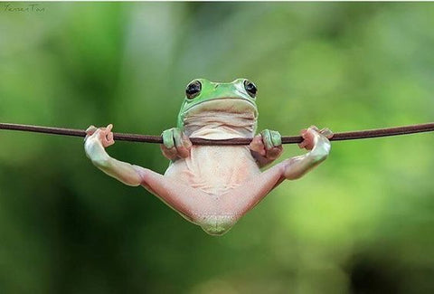 frog hanging from a branch
