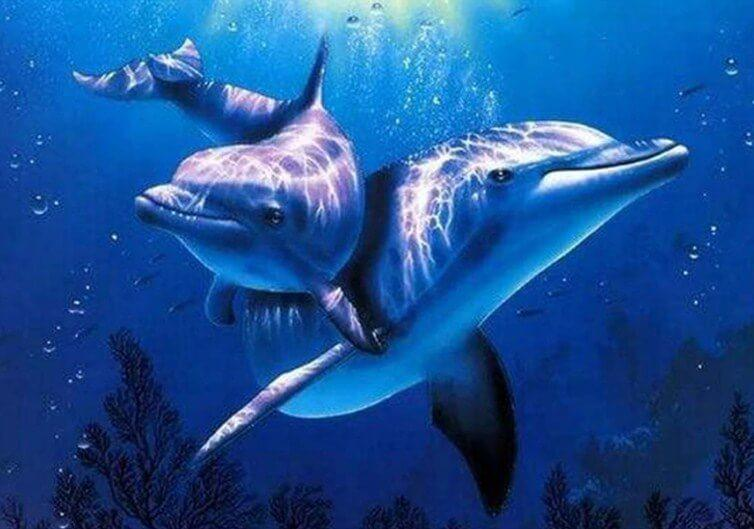 Adorable Dolphins in Sea- Paint by Numbers Kit