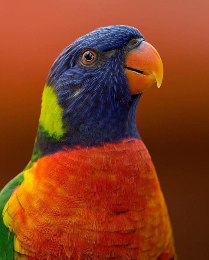 Parrot of Colors Paint by Numbers