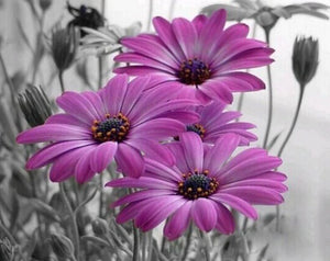 Un-Matchable Beauty of Purple Flowers - Paint by Numbers
