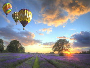 Beautiful Scenery of Balloons Flying over Fields