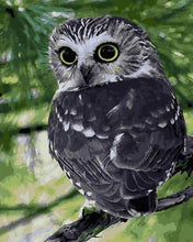 Load image into Gallery viewer, Painting of Grey Owl