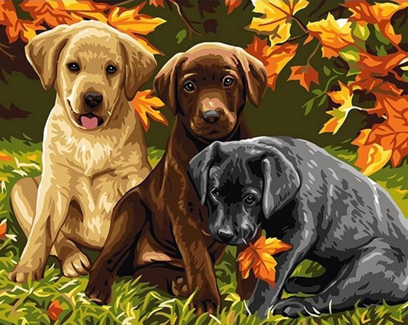 puppy painting kits