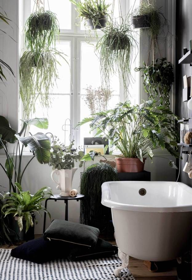 Enduring Trend of 2019 #2 Living form of Interior - Plants