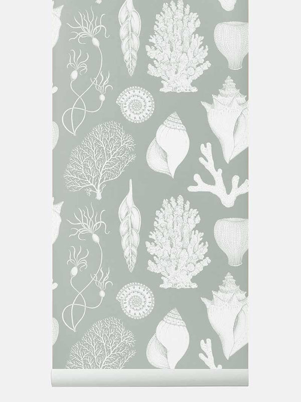 Katie Scott Wallpaper - Shells - Aqua