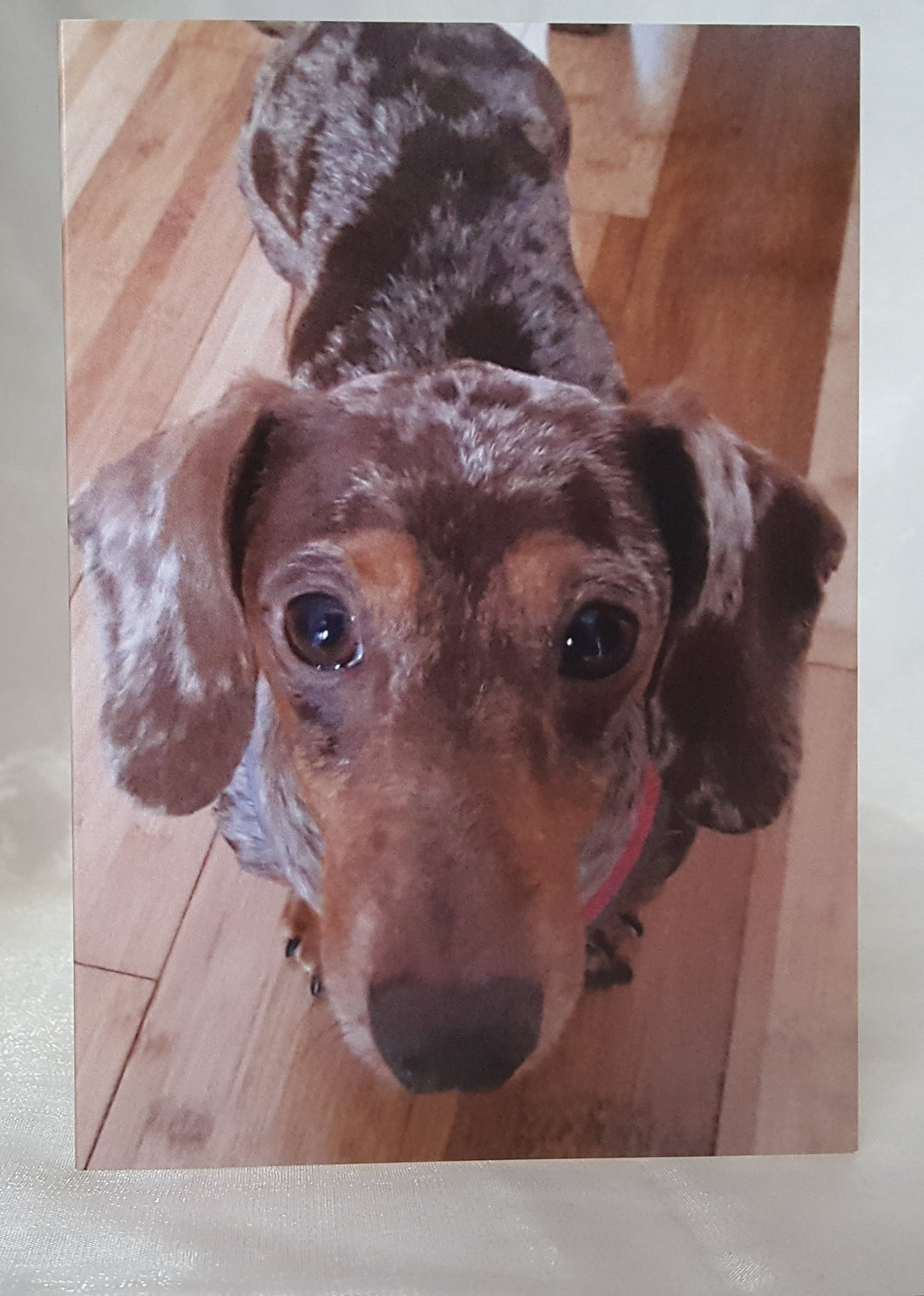 Dachshund Dapple Greeting Cards