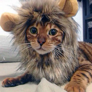 Cat Lion's Mane Costume