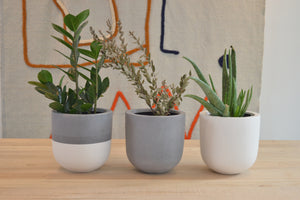 HOUSEPLANTS FOR NEWBIES