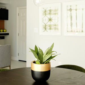 Black planter with gold detail