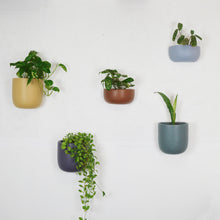 SOLID SHORT WALL PLANTER | POT