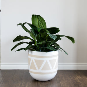beige triangle patterned planter with large peace lily
