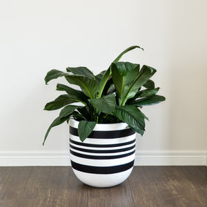 Large white plant pot with black painted stripe design