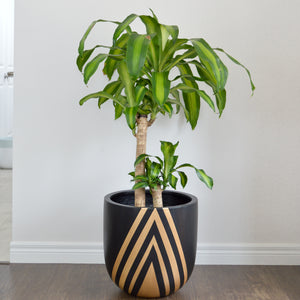 modern lightweight black planter pot with gold diamond design