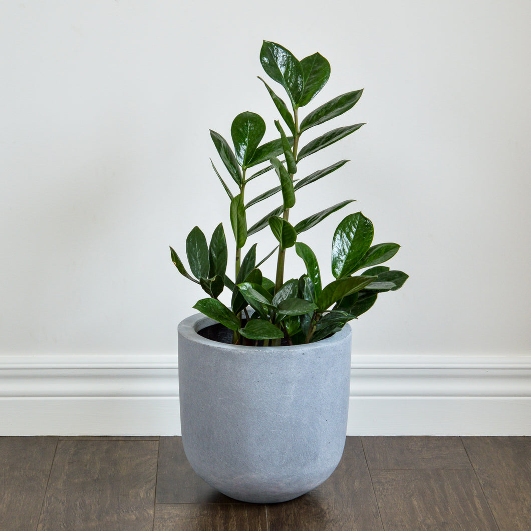 NATURAL POT | PLANTER