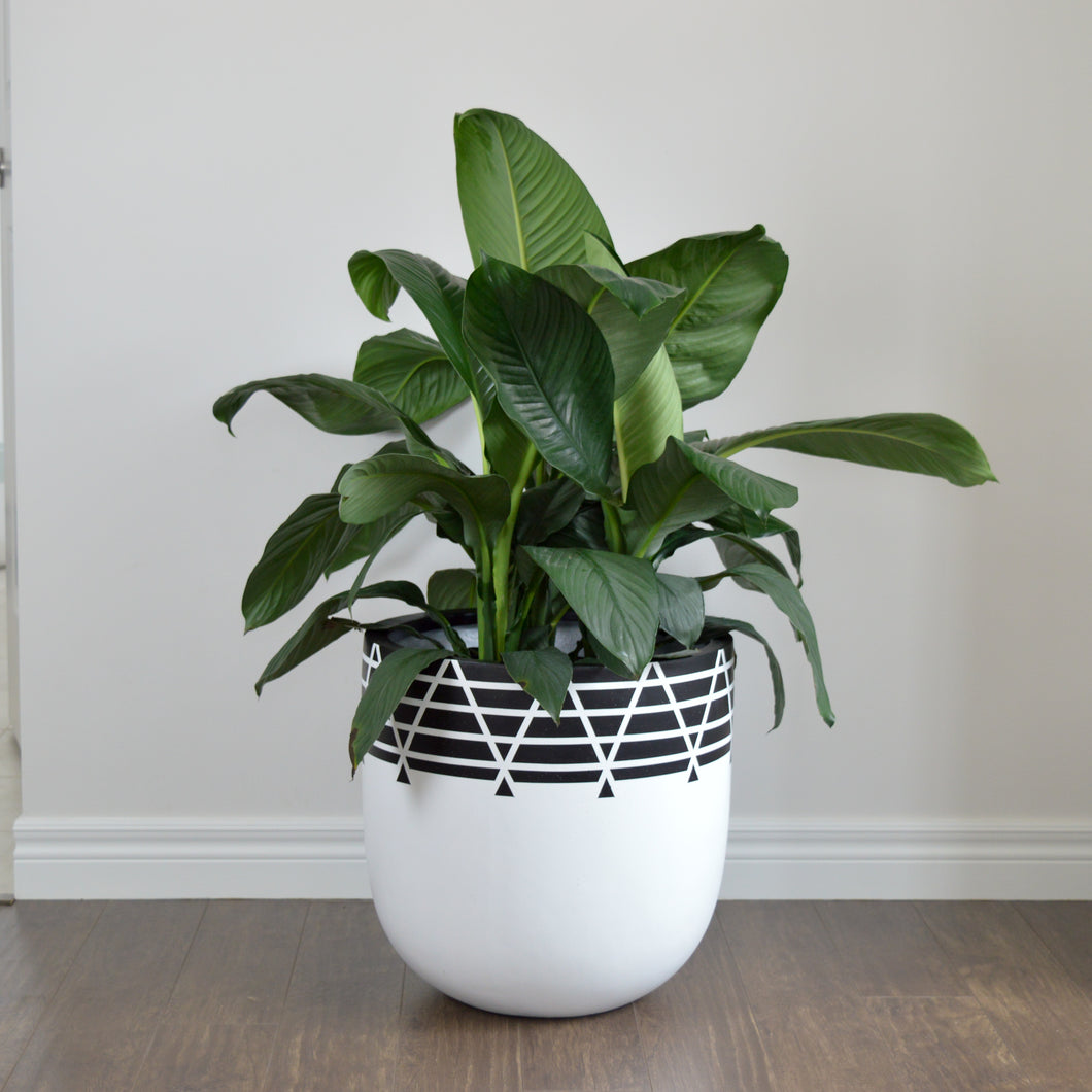 NETTE POT | PLANTER