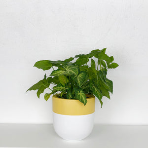 DIVIDED POT | PLANTER