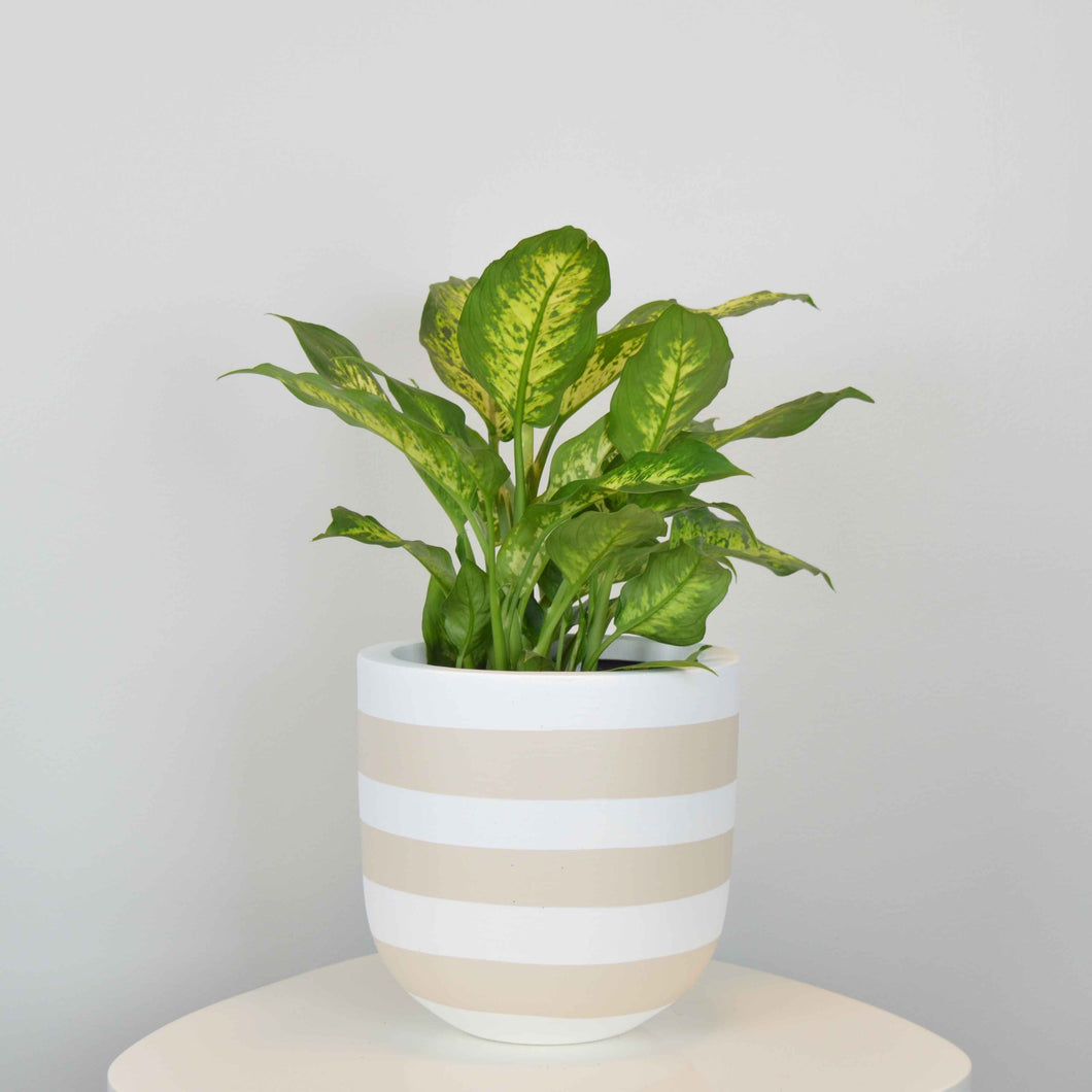 RUGBY POT | PLANTER
