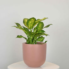 ESSENTIAL POT | PLANTER