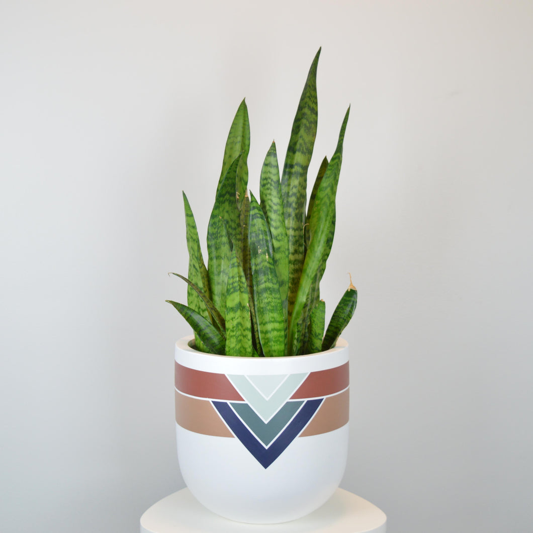 MARRAKESH POT | PLANTER