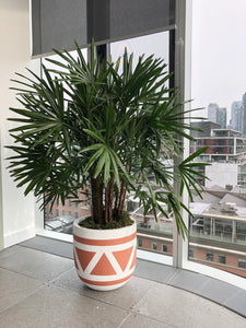 aztec plant pot in office building